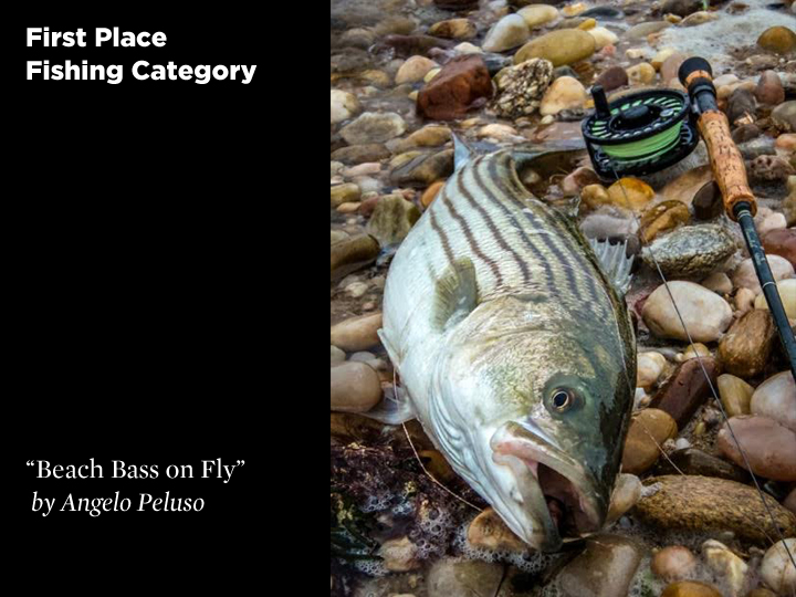 1st Place Fishing Category, Beach Bass on Fly by Angelo Peluso