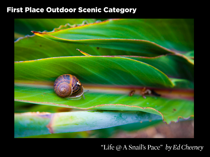 1st Place Outdoor Scenic Category, Life @ A Snail's Pace by Ed Cheeney