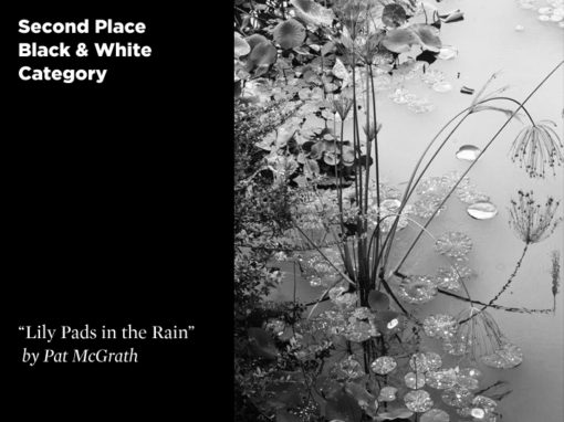 2nd Place Black & White Category, Lily Pads in the Rain by Pat McGrath