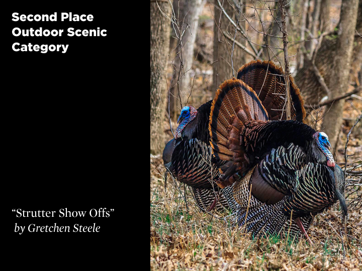 2nd Place Outdoor Scenic Category, Strutter Show Offs by Gretchen Steele
