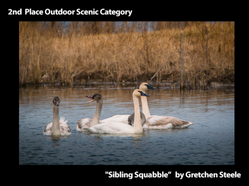 """2nd Place Outdoor Scenic """"Sibling Squabble"""" by Gretchen Steele"""