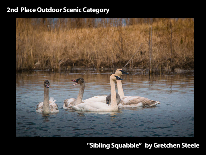 "2nd Place Outdoor Scenic ""Sibling Squabble"" by Gretchen Steele"