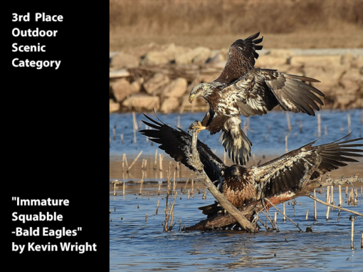 "3rd Place Outdoor Scenic ""Immature Squabble-Bald Eagles"" by Kevin Wright"