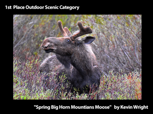 """1st Place Outdoor Scenic """"Spring Big Horn Mountians Moose"""" by Kevin Wright"""