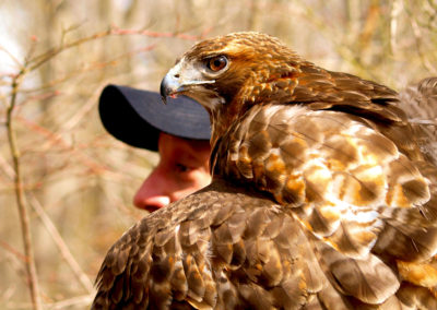 Profiles in Falconry